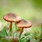 Two Fungi (June Voucher challenge)
