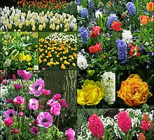 Keukenhof Collage featuring Anemones and Hyacinths by BlueMoonRose