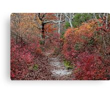 The beech tree forest Canvas Print