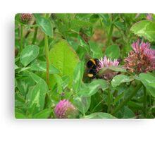 Pollenator Canvas Print