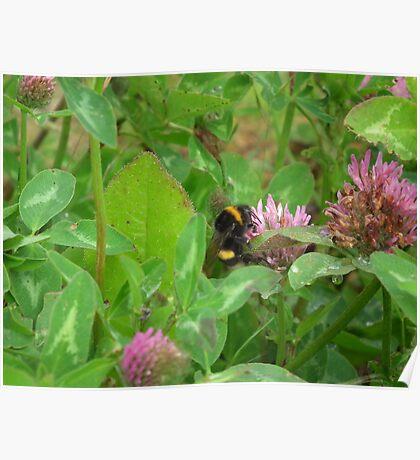 Pollenator Poster