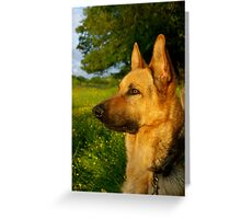 Blaze- (German Shepherd) Greeting Card