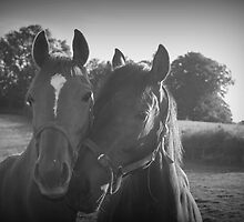 Thoroughbred Love by Lou Wilson