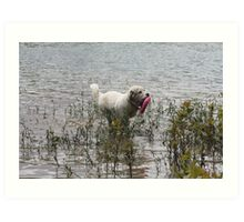 Great Pyrenees Fetching Adventure Art Print