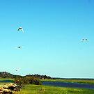 The magic of Arnhem Land - Birds over the wetlands by georgieboy98
