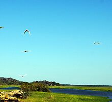 The magic of Arnhem Land - Birds over the wetlands by georgieboy98