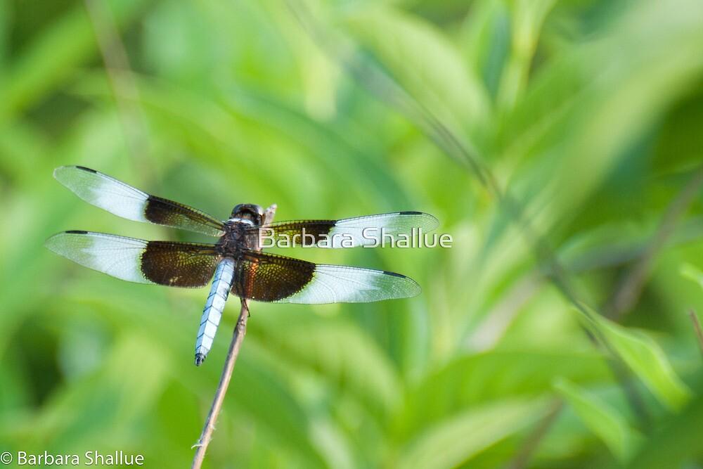 Dragonfly by Barbara Shallue
