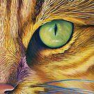 El Gato by Brian Commerford