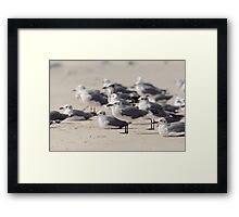 Crowded Beach Framed Print