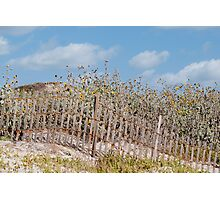 Dune Decoration Photographic Print