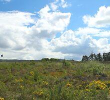 Culloden Battlefield 1 by AlbertLake