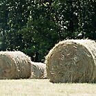 Rolling in the Hay by Sherry Hallemeier