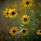Wildflowers by Jerry Philpot