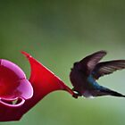 Hummingbird Posing as a Ballerina by Sherry Hallemeier