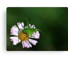 Tiny Hopper Canvas Print