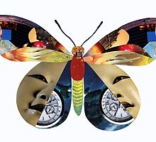 Tiger Moth Adrift In Time by Donuts