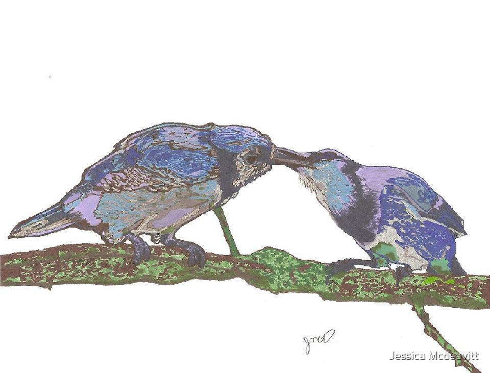 Bluejays courting by jessican