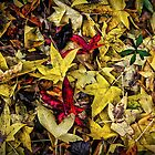 Fallen Leaves by TonyCrehan