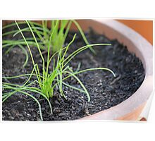Bright small onion plant Poster