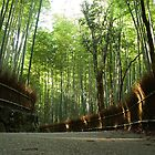 Sagano Bamboo Forest by junkgirl