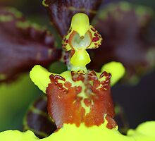 Orchid Super Macro by Carole-Anne
