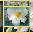 Collage of Lilies by debbiedoda