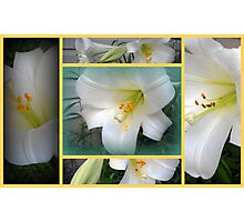 Collage of Lilies Photographic Print