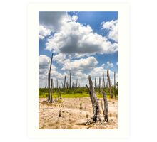 Ghost Forest - Mexican Gulf Coast in the Yucatan Art Print