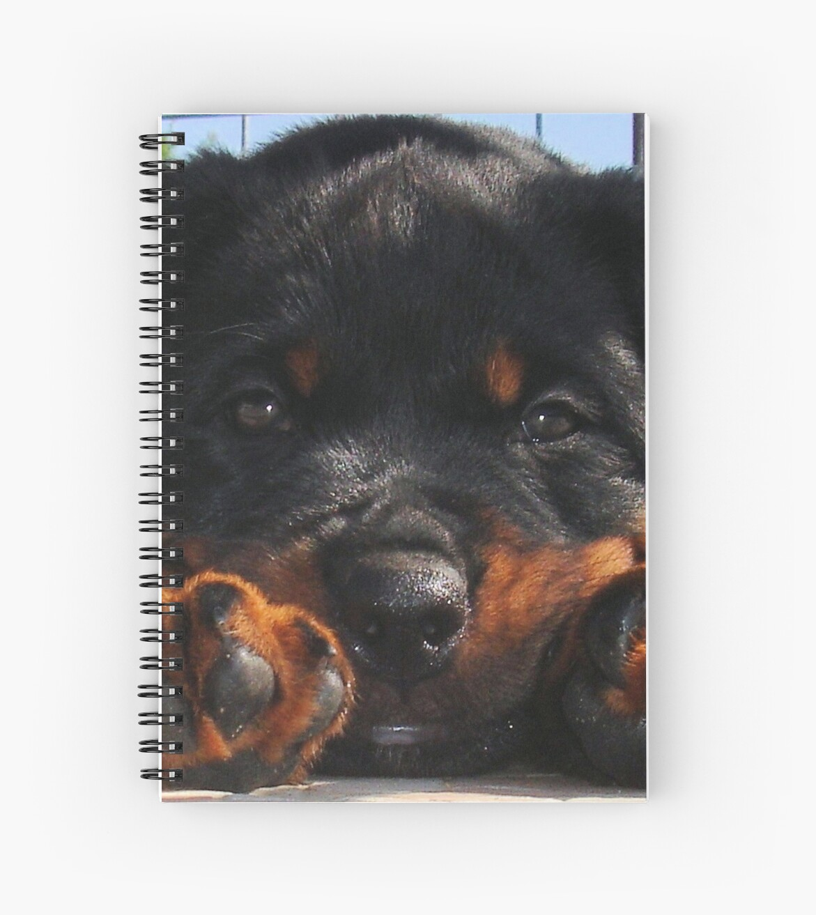Cute Rottweiler Puppy Resting Head Between Paws by taiche
