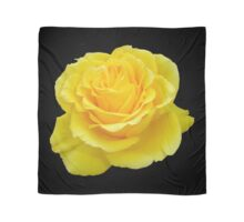Beautiful Yellow Rose Flower on Black Background Scarf