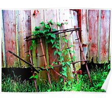 Ivy Grows on a Gate Poster