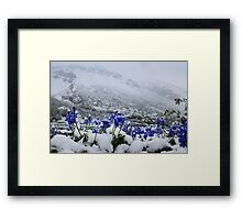 Snow Lupin Framed Print