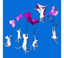 Flying Cats Photographic Print