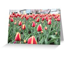 Colorful tulips in the city Greeting Card