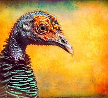 Finer Feathered Friends: Occelated Turkey by alan shapiro