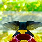 Mmmmm Good Nectar by Al Bourassa