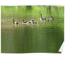 Family flock picnic!  Poster
