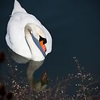 single swan by Tamara  Kaylor