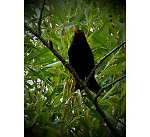 Does my beak stand out Photographic Print