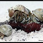 Crab Family by Jonathan  Jarman