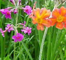 Flowers (2) by Browneyedgirl78