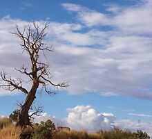 Bare tree by Anne Scantlebury
