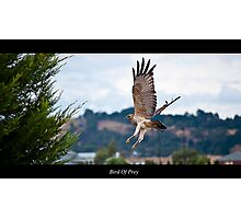 Bird of prey. Photographic Print