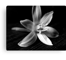 STAR OF BETHLEHEM (BLACK AND WHITE) Canvas Print