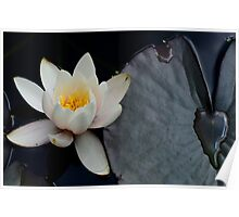 Lily Pad Love... Poster