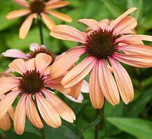 Flowers in Denver by abuller