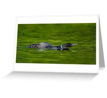 Leaning Loon  Greeting Card