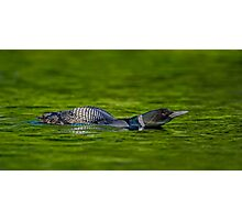 Leaning Loon  Photographic Print
