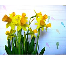 Daffodils with Birds on a Wire Photographic Print