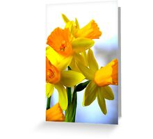 Daffodils with Soft Light Greeting Card